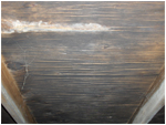 Discolored Plywood or Mold