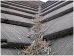 Roof Tile Debris