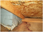Wet Interior in Attic