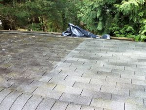 Does moss damage my roof?