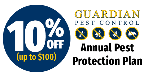 10% Off Annual Pest Maintenance Plan