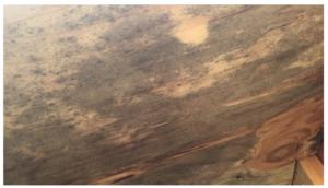 Organic Growth on Plywood